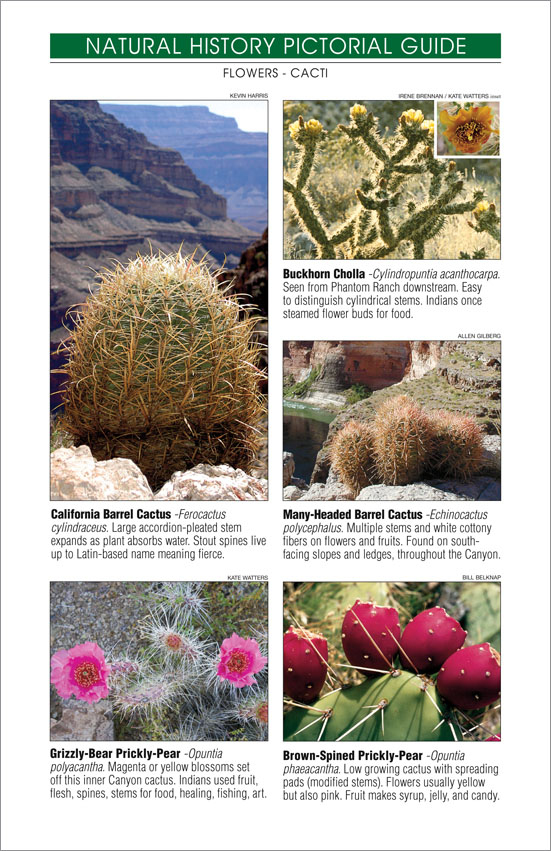 Grand Canyon River Guide - National History - Cactus